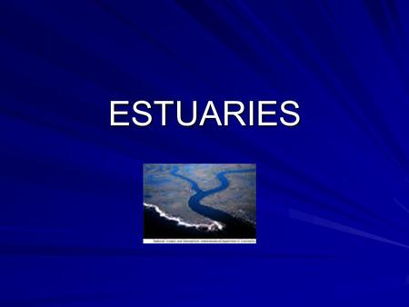 ESTUARIES. What is an estuary? Area where fresh water meets salt water Semi-enclosed Transition zone Includes bays and lagoons.