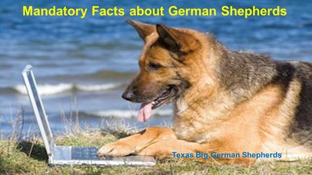 Mandatory Facts about German Shepherds