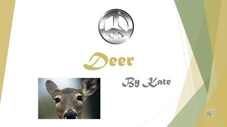 Deer By Kate INTRODUCTION I decided to study the deer because I already had some back round knowledge but I wanted to know more about these graceful,