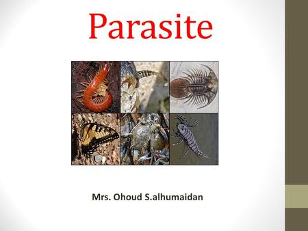 Parasite Mrs. Ohoud S.alhumaidan. Introduction Paraitology : Parasitism : (chapter 21) Parasite : is an organism baring food and shelter temporarily or.