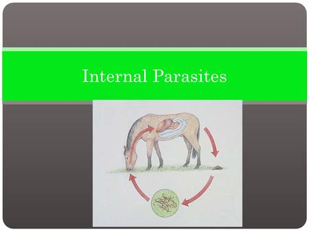 Internal Parasites. An internal parasite lives at least part of its life cycle inside the host. There are more than 150 types of internal parasites that.