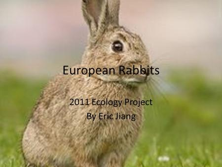 European Rabbits 2011 Ecology Project By Eric Jiang.