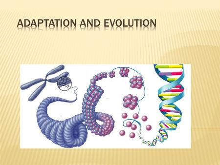 Evolution is the change in the inherited traits of a population of organisms through successive generations  Two factors at work:  Processes that.
