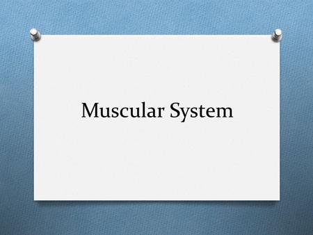 Muscular System. Quick facts O How many muscles do you think the body contains? O The body has more than 600 muscles O What percentage of the bodies weight.