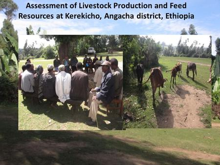 Assessment of Livestock Production and Feed Resources at Kerekicho, Angacha district, Ethiopia.