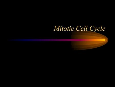 Mitotic Cell Cycle Binary Fission Mitotic Cell Cycle.