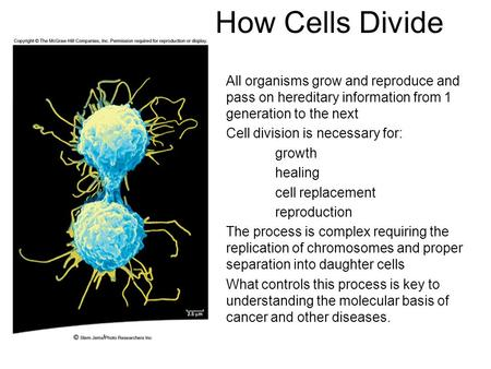 How Cells Divide All organisms grow and reproduce and pass on hereditary information from 1 generation to the next Cell division is necessary for: growth.