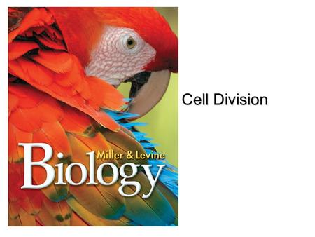 Lesson Overview Lesson Overview The Process of Cell Division Cell Division.