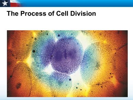 The Process of Cell Division. Learning Objectives  Describe the role of chromosomes in cell division.  Name the main events of the cell cycle.  Describe.