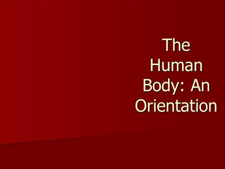 The Human Body: An Orientation. The Human Body—An Orientation Anatomy –Study of the structure and shape of the body and its parts Physiology –Study of.