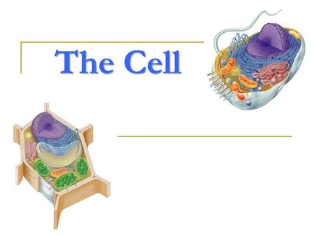 The Cell Why study cells? organisms are made up of cells cells do all the work of life!