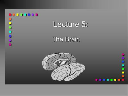 Lecture 5: The Brain. Nervous System (neurons) CNS n Central Nervous System Brain + Spinal cord PNS n Peripheral Nervous System (All nerves that reach.