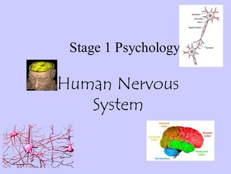 Stage 1 Psychology Human Nervous System. The nervous system is made up of several parts. The Central Nervous System (CNS) is made up of the areas encased.