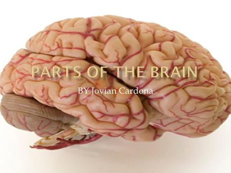 BY Jovian Cardona.  The cerebrum is another name for the cerebral cortex which is the part of the brain dedicated to higher activities such as complex.