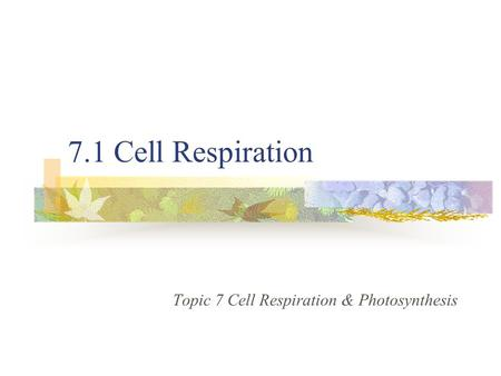 7.1 Cell Respiration Topic 7 Cell Respiration & Photosynthesis.