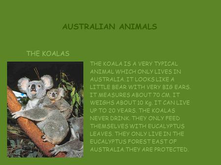 AUSTRALIAN ANIMALS THE KOALAS THE KOALA IS A VERY TYPICAL ANIMAL WHICH ONLY LIVES IN AUSTRALIA. IT LOOKS LIKE A LITTLE BEAR WITH VERY BIG EARS. IT MEASURES.