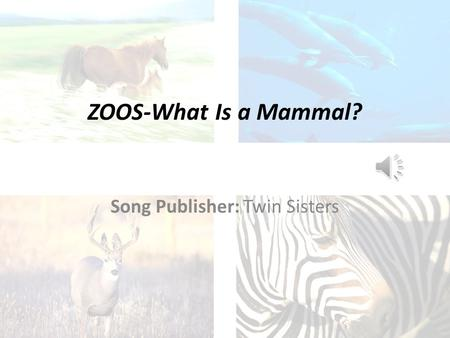 ZOOS-What Is a Mammal? Song Publisher: Twin Sisters.