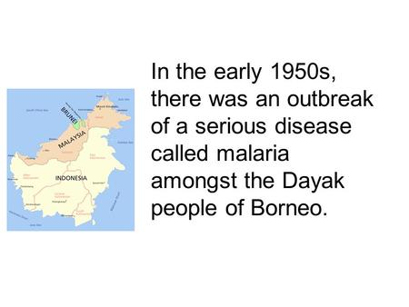 In the early 1950s, there was an outbreak of a serious disease called malaria amongst the Dayak people of Borneo.