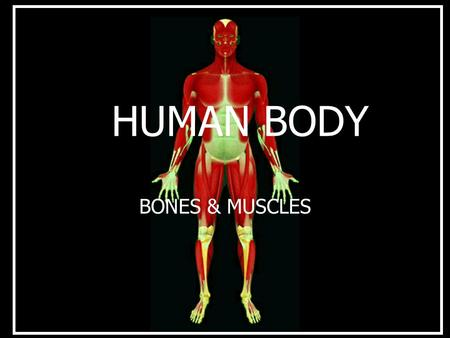 HUMAN BODY BONES & MUSCLES TOPICS Bones. The various types of joints & their functions. Various types of muscle movements in man body.