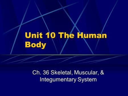 Unit 10 The Human Body Ch. 36 Skeletal, Muscular, & Integumentary System.