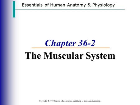 Essentials of Human Anatomy & Physiology Copyright © 2003 Pearson Education, Inc. publishing as Benjamin Cummings Chapter 36-2 The Muscular System.