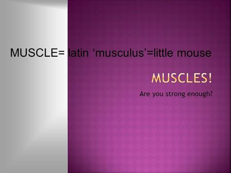 Are you strong enough? MUSCLE= latin 'musculus'=little mouse.