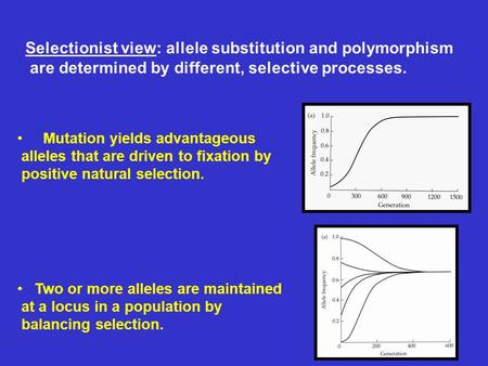 Selectionist view: allele substitution and polymorphism are determined by different, selective processes. Mutation yields advantageous alleles that are.
