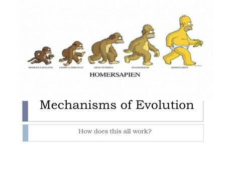 Mechanisms of Evolution How does this all work?.