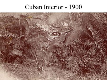 Cuban Interior - 1900. Carlos Juan Finlay (1833 - 1915) Son of a Scottish doctor and a Parisienne, born in Cuba but received early schooling in France.