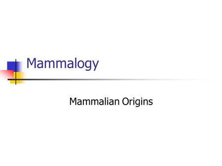 Mammalogy Mammalian Origins. What is a mammal and why did they evolve? We have a number of problems: Ectothermy is very efficient. Reptiles experience.