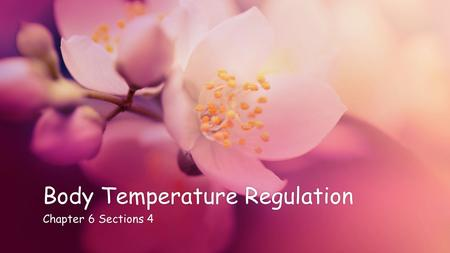 Body Temperature RegulationBody Temperature Regulation Chapter 6 Sections 4Chapter 6 Sections 4.