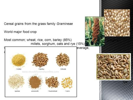 Sorghum rye.  Structure: individual kernels or grain called caryopses Caryopses Protective outer husk Bran covering Starchy endosperm Germ.