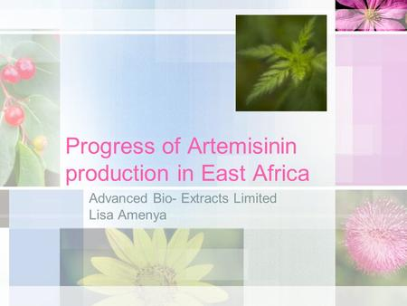 Progress of Artemisinin production in East Africa Advanced Bio- Extracts Limited Lisa Amenya.