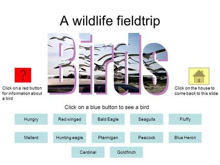 A wildlife fieldtrip HungryRed wingedBald EagleSeagullsFluffy MallardHunting eaglePtarmiganPeacockBlue Heron CardinalGoldfinch Click on a red button for.