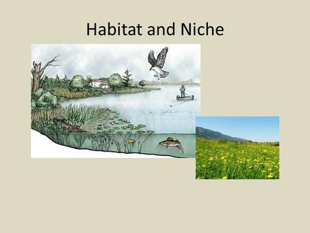 Habitat and Niche. Habitat Habitat (Home): A place where a living thing lives is its habitat. It is a place where it can find food, shelter, protection.