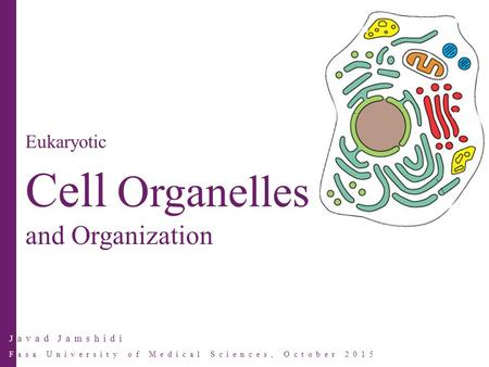 Javad Jamshidi Fasa University of Medical Sciences, October 2015 Eukaryotic Cell Organelles and Organization.