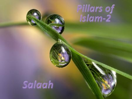 Pillars of Islam-2 Salaah.