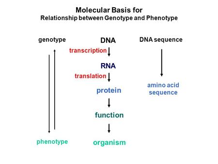 Relationship between Genotype and Phenotype