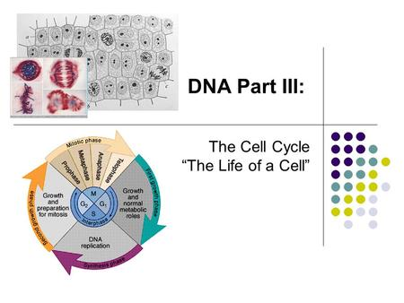 "DNA Part III: The Cell Cycle ""The Life of a Cell""."