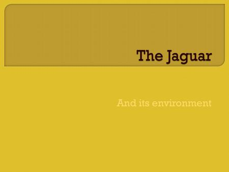 And its environment. The Jaguars Community consist of Chimpanzees, Red Eyed Tree Frog, Iguanas, Banana Trees, Python, Monkeys, Parrots, The Rhinocerous.