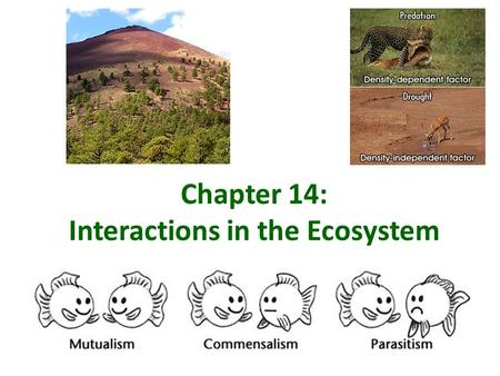Chapter 14: Interactions in the Ecosystem. Niche versus Habit? Habitat Habitat – describes all of the abiotic and biotic factors in the area where an.