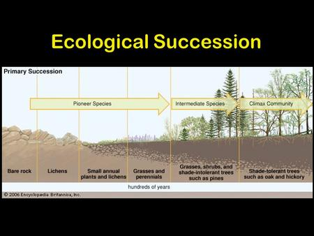1 Ecological Succession Change over time 1. 2 Pioneer Organisms Pioneer organisms are the first organisms to reoccupy an area which has been disturbed.