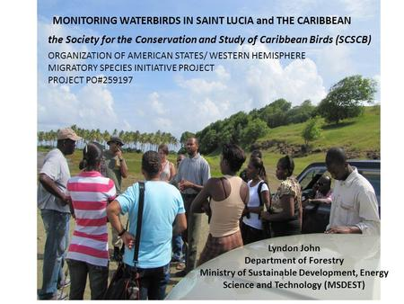 MONITORING WATERBIRDS IN SAINT LUCIA and THE CARIBBEAN the Society for the Conservation and Study of Caribbean Birds (SCSCB) Lyndon John Department of.