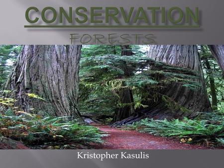Kristopher Kasulis.  A large piece of land covered with trees and many forms of underbrush (Dictionary.com)  An ecosystem or multiple ecosystems dominated.