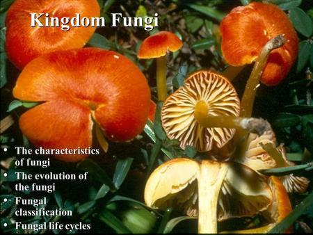 Kingdom Fungi The characteristics of fungi The characteristics of fungi The evolution of the fungi The evolution of the fungi Fungal classification Fungal.