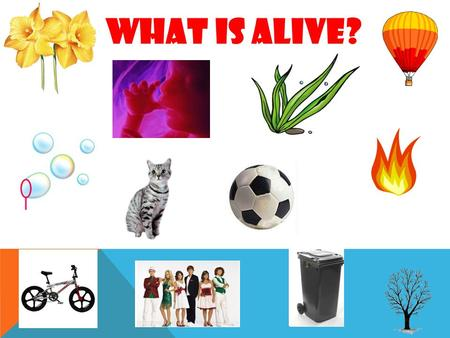 What is alive?. What do all animals do? What do all plants do?