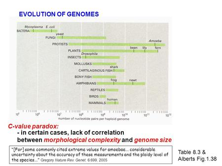 Table 8.3 & Alberts Fig.1.38 EVOLUTION OF GENOMES C-value paradox: - in certain cases, lack of correlation between morphological complexity and genome.