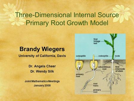 Three-Dimensional Internal Source Primary Root Growth Model Brandy Wiegers University of California, Davis Dr. Angela Cheer Dr. Wendy Silk Joint Mathematics.