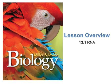 Lesson Overview Lesson OverviewFermentation Lesson Overview 13.1 RNA.