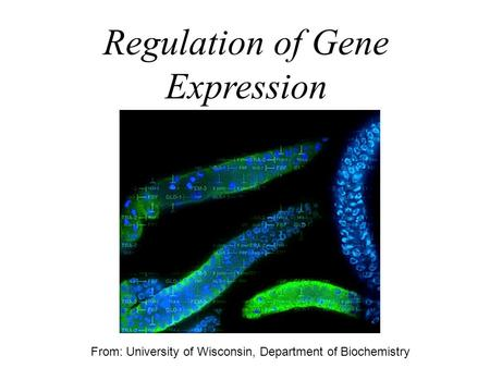 Regulation of Gene Expression From: University of Wisconsin, Department of Biochemistry.